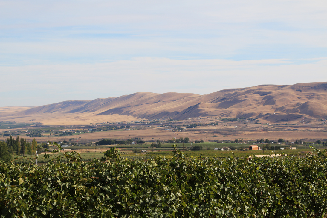 The barren hills of the Red Mountain AVA in south-central Washington State
