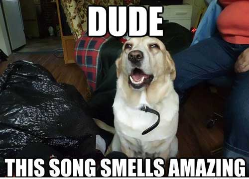 Song Smelling Retriever - We've all been there!via weknowmemes.com