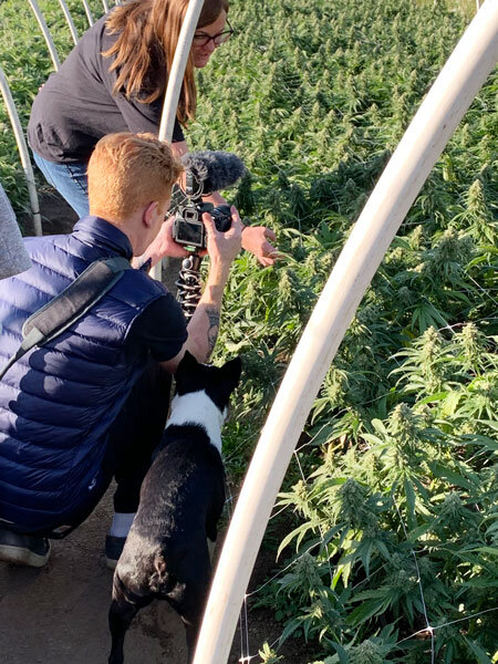 Getting close up shots of the Alien Candy strain just hours before harvest, with the aid of a friendly helper :)