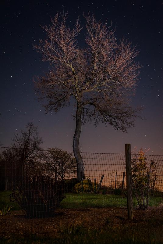 Virginia Tree