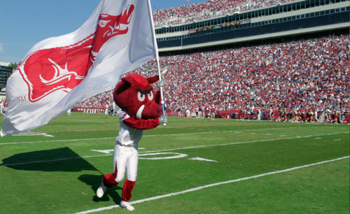 U of A Hog on the Field.png