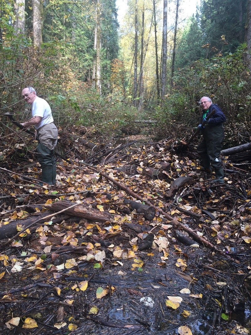 Debris Removal - November 1, 2017Thanks to Gert, Terry, Mitch and Helen for removing a dam of large logs, branches and more. Big thank you them for hours spent cutting and and removing. Resulting in passage for salmon in Hyde Creek.