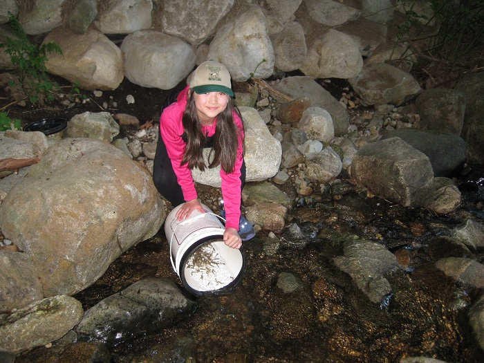 Fry Release - May 8 and 9, 2019Members & visitors helped move the Coho fry from the HCWS hatchery to Partington and Smiling creeks.
