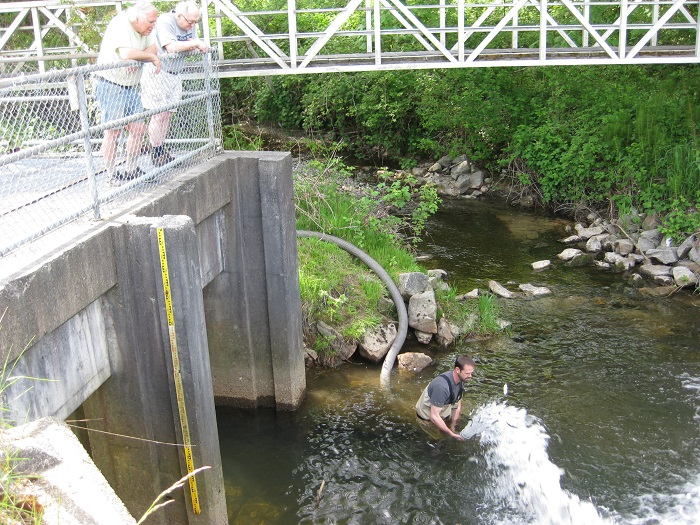 Smolt Releases - May 9 and 13th, 2019Coho smolts have been raised in the HCWS rearing pond for 18 months. It's time for them to travel to the ocean and return at 4 years old back to Hyde Creek as spawning salmon. Due to low water levels in Hyde Creek the smolts were trailered to DeBoville Slough area for release.