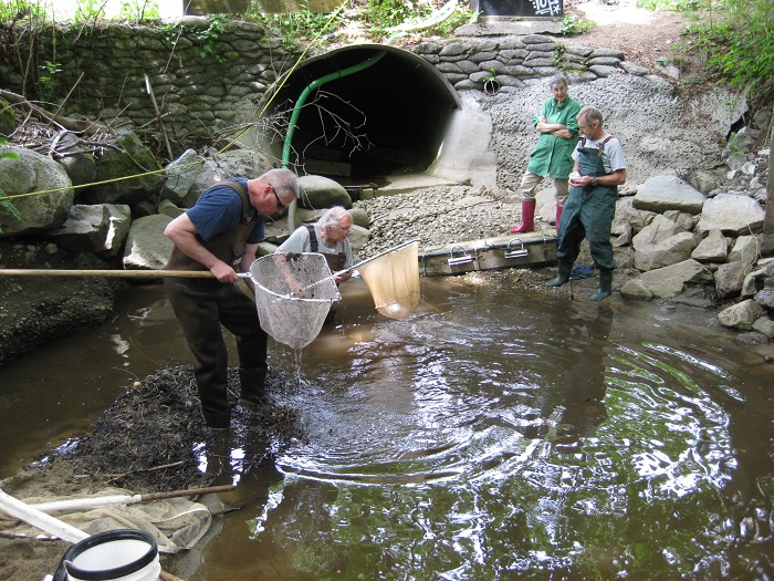 Fish Rescue - May 13th, 2019The warm dry weather is drying up parts of Hyde Creek. Members are out on many days moving fish from small ponds to larger pond areas or to DeBoville Slough.