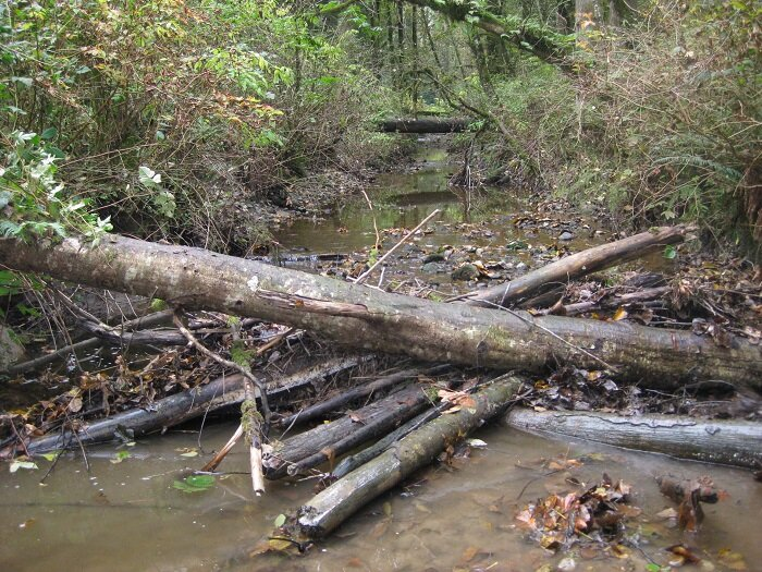 Log Jam Removal - October 12, 2019Another Hyde Creek log jam removed by members Mitch, Vlad and Shane