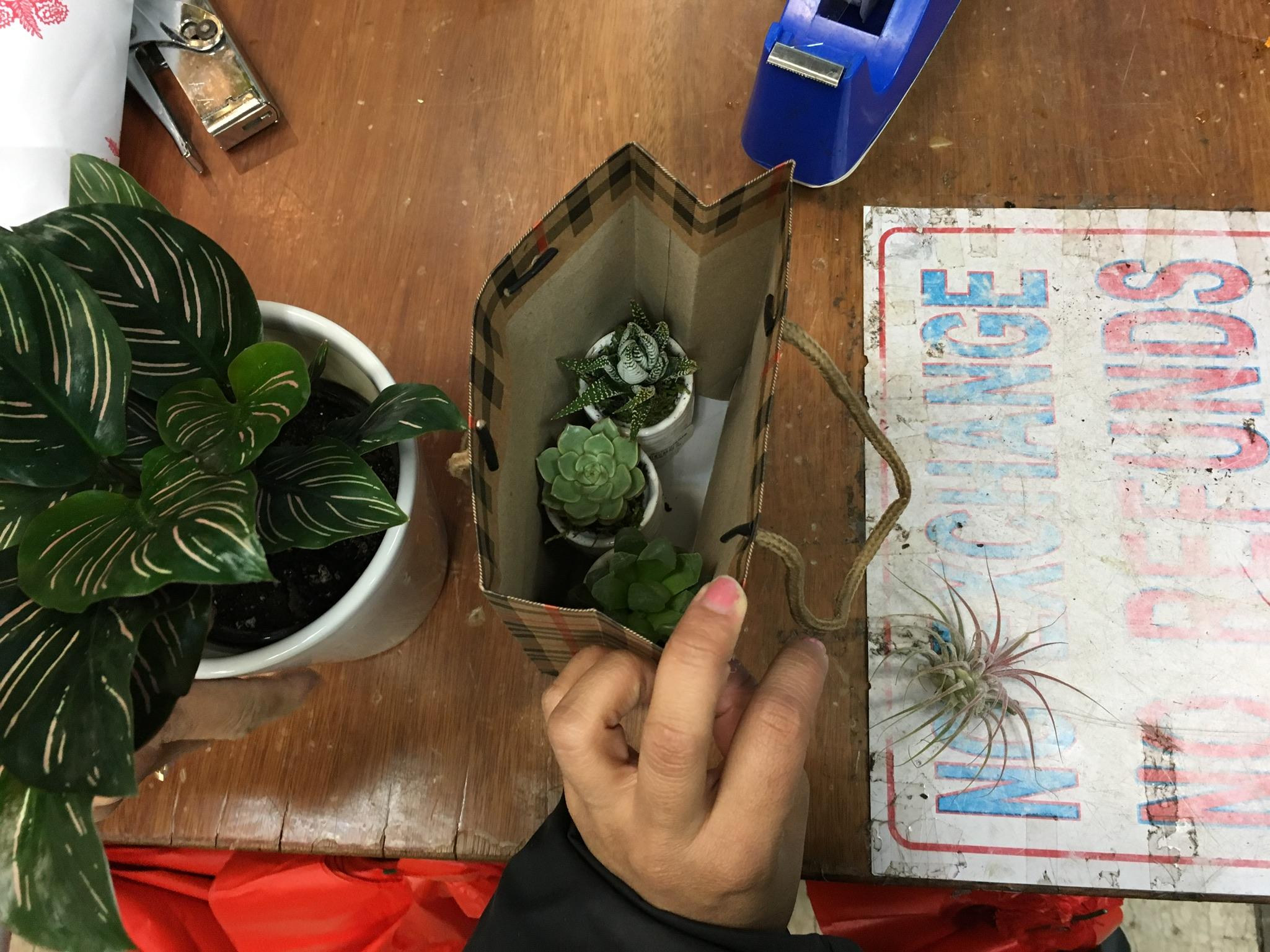 Plants at Da Hing Flower Shop