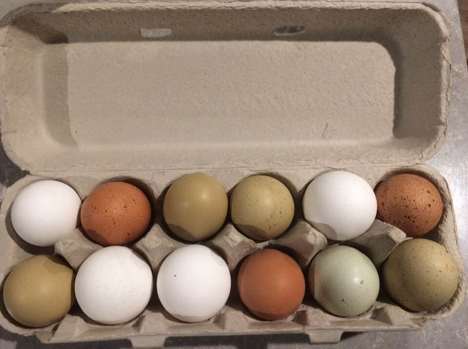 Most of our eggs are brown, but take a look at the variety our hens produce!