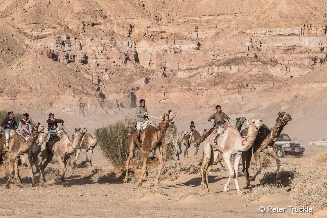 Peter Truckle Wadi Zalaga Camel Race