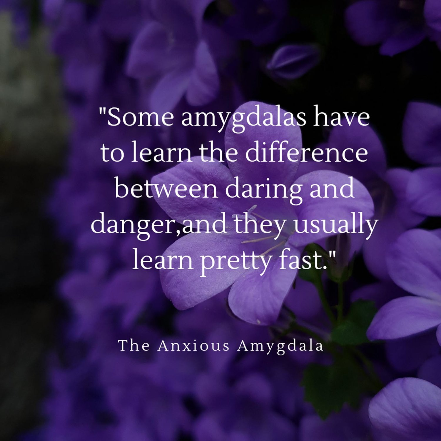 Quote from My Anxious Amygdala