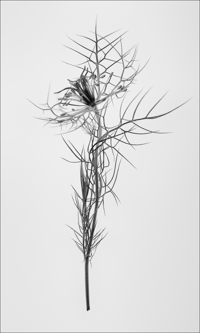Floral Skeleton (c) 2017 Margaret Miller