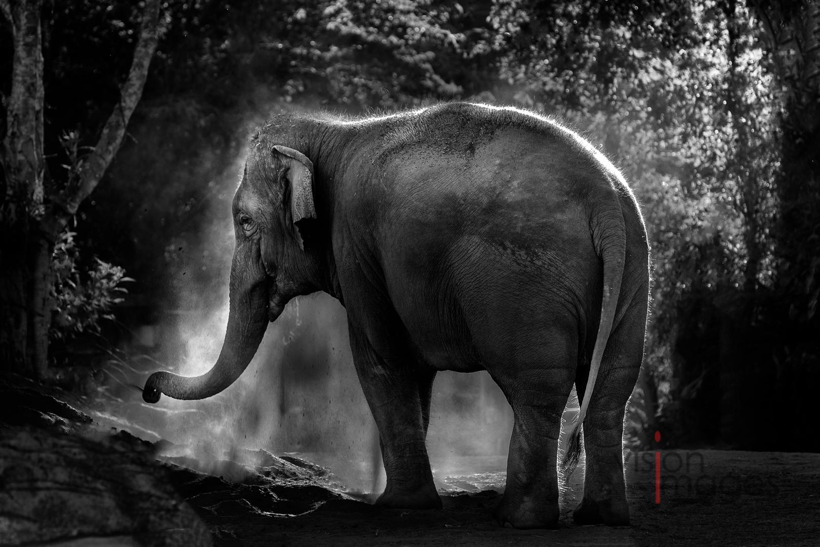 Elephant photographed at Taronga Zoo (c) Jacci Schipp-Benz