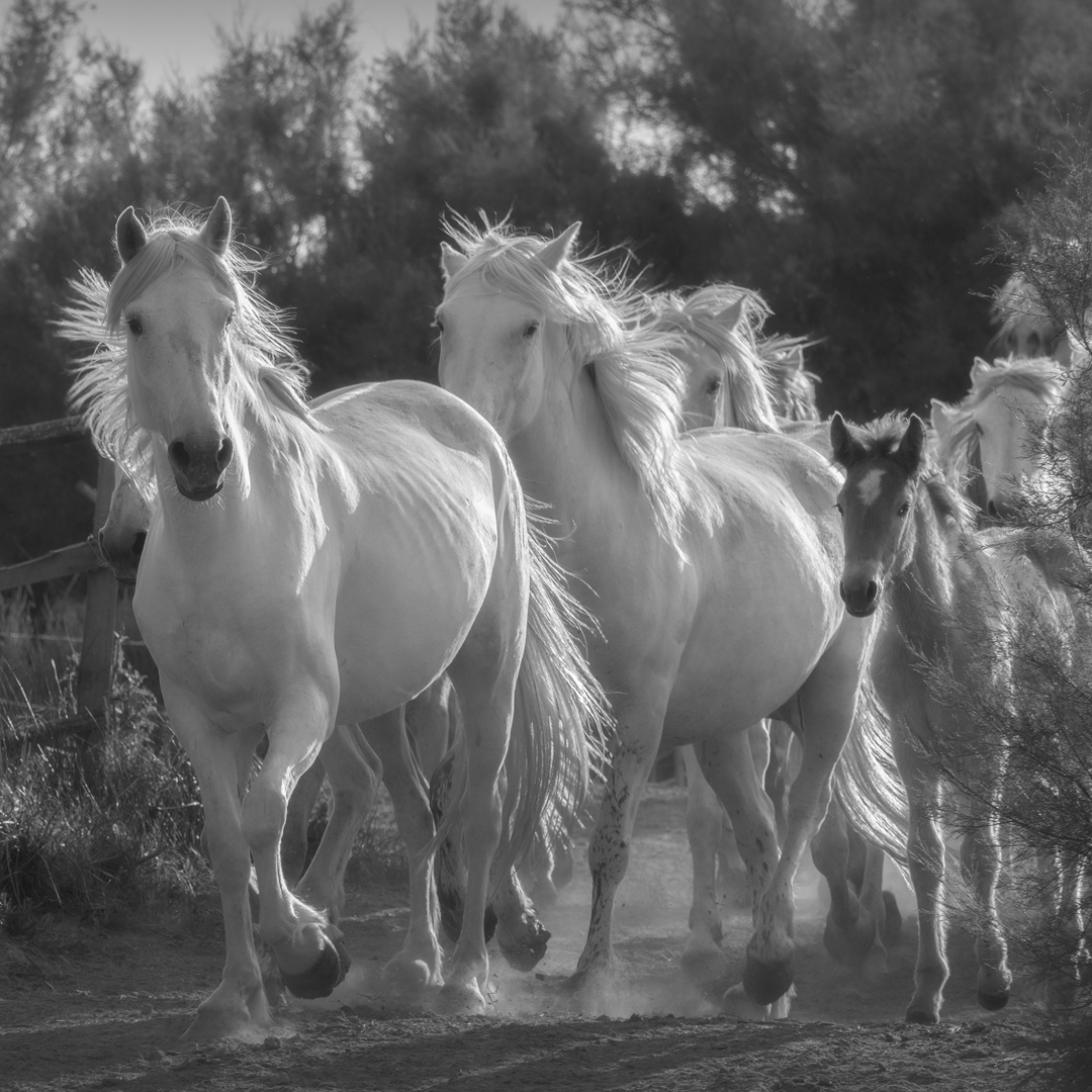 20horses_Day#9_TheCamargue_20180520_6593B.jpg