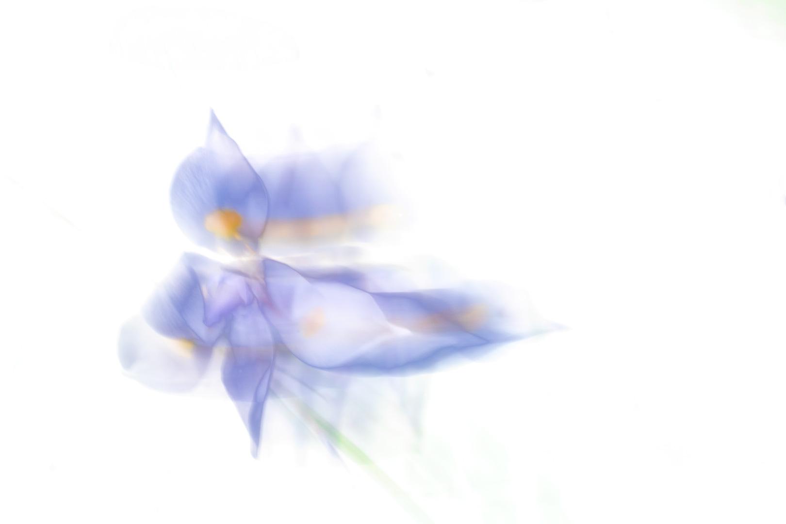 gavin perry - Graeme Dobbs - Flower in Motion _white_screen_1-1.jpg