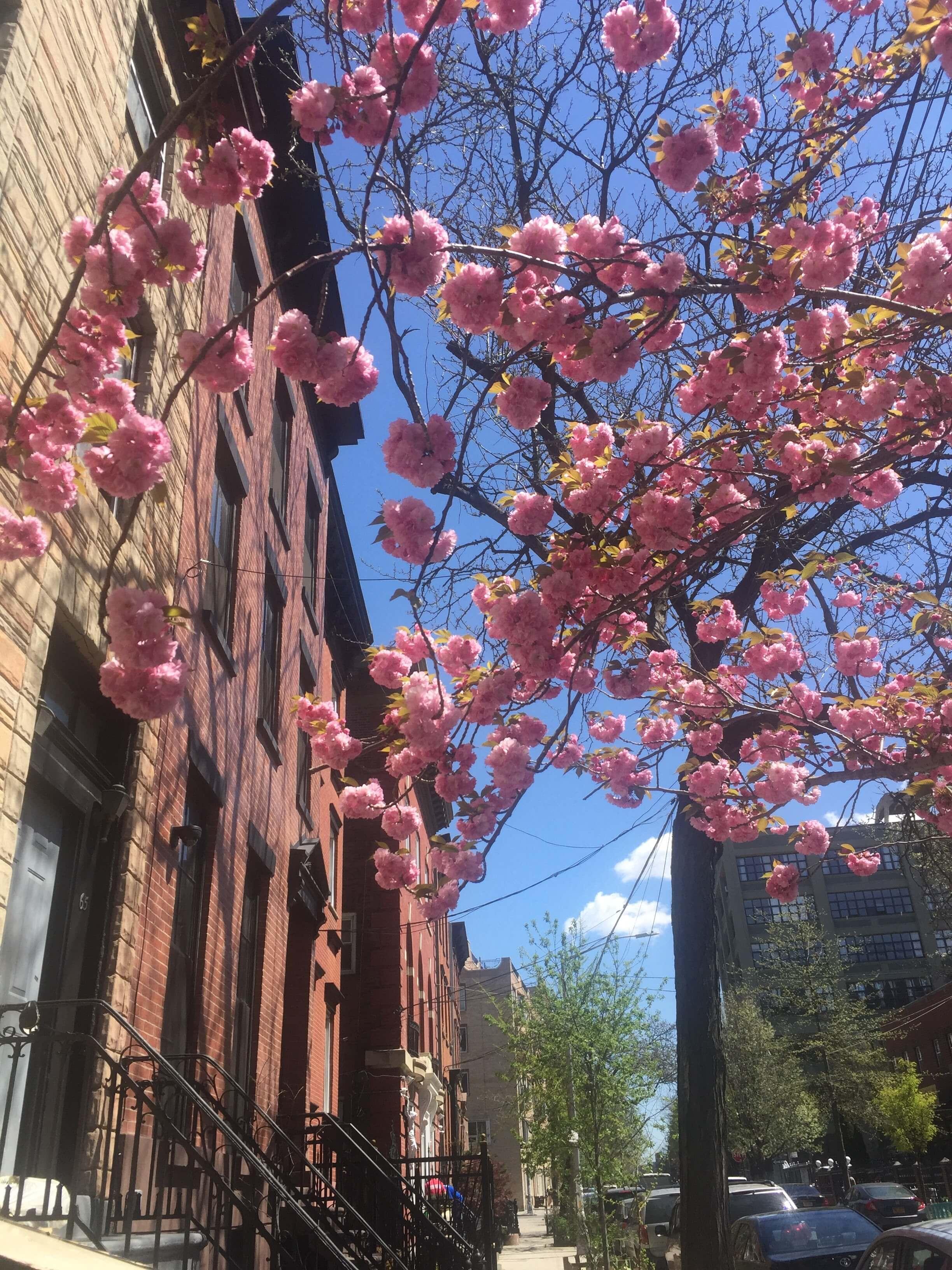 Last Spring day in Williamsburg.