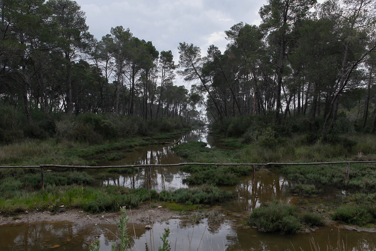 Karavasta Lagoon,Divjaka-Karavasta National Park, photography Alketa Misja, Albania April 2016