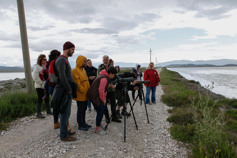 Birdwatching.Narta Lagoon and Salinas, photography Alketa Misja, Albania April 2016