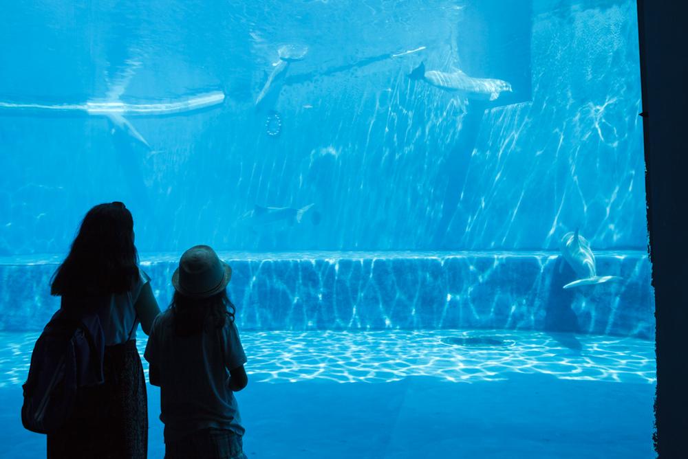 Bottlenose Dolphins, Cetaceans Pavilion. Acquario di Genova, ©alketamisja photography, August 2016