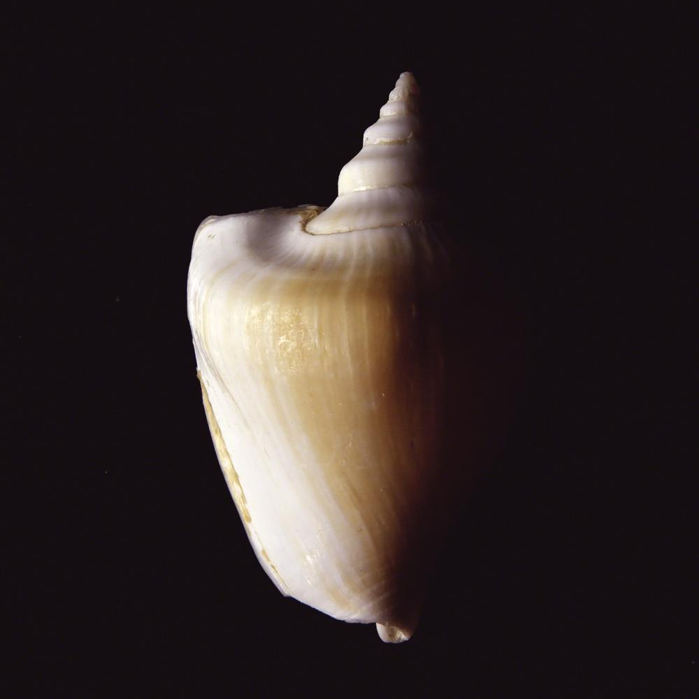 Shell Study #6