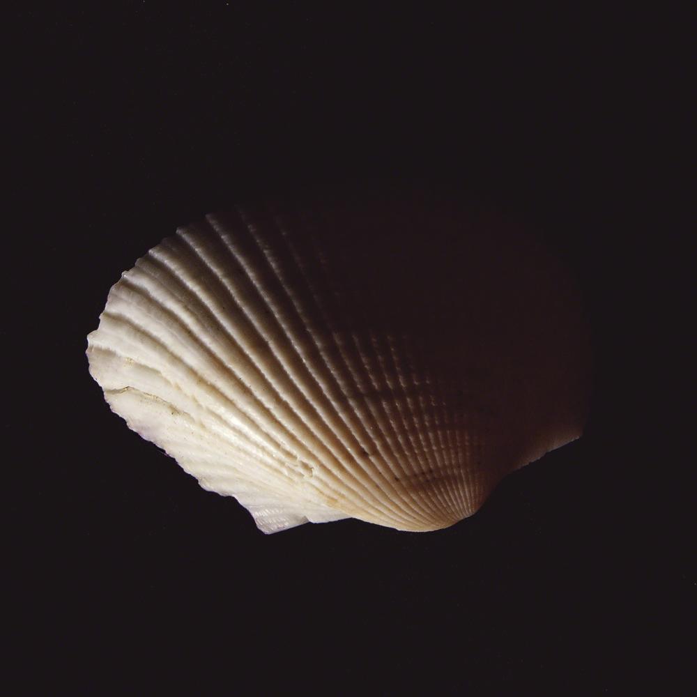 Shell Study #5