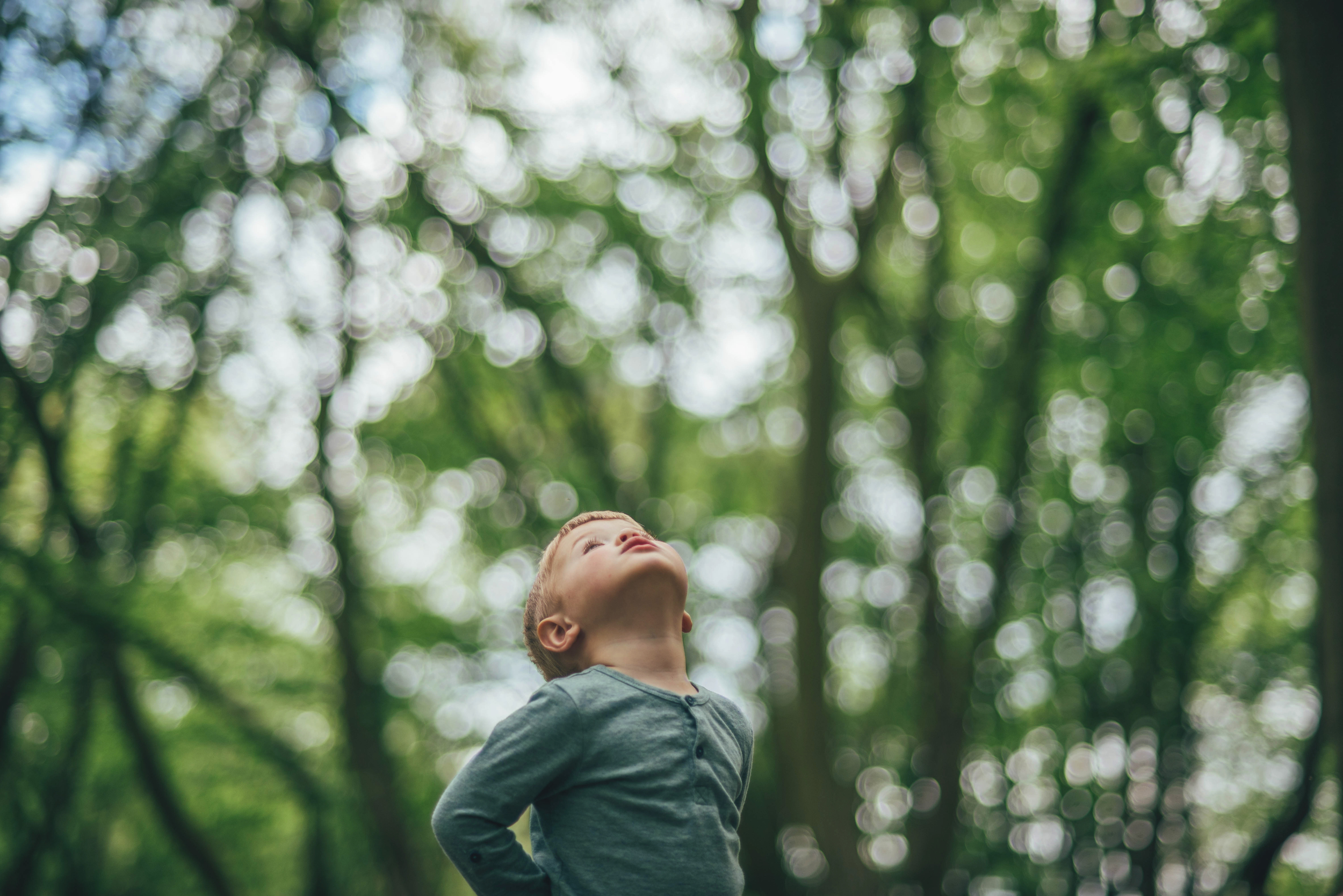 Young boy in woods looks up to the sky Essex Documentary Lifestyle Portrait Photographer