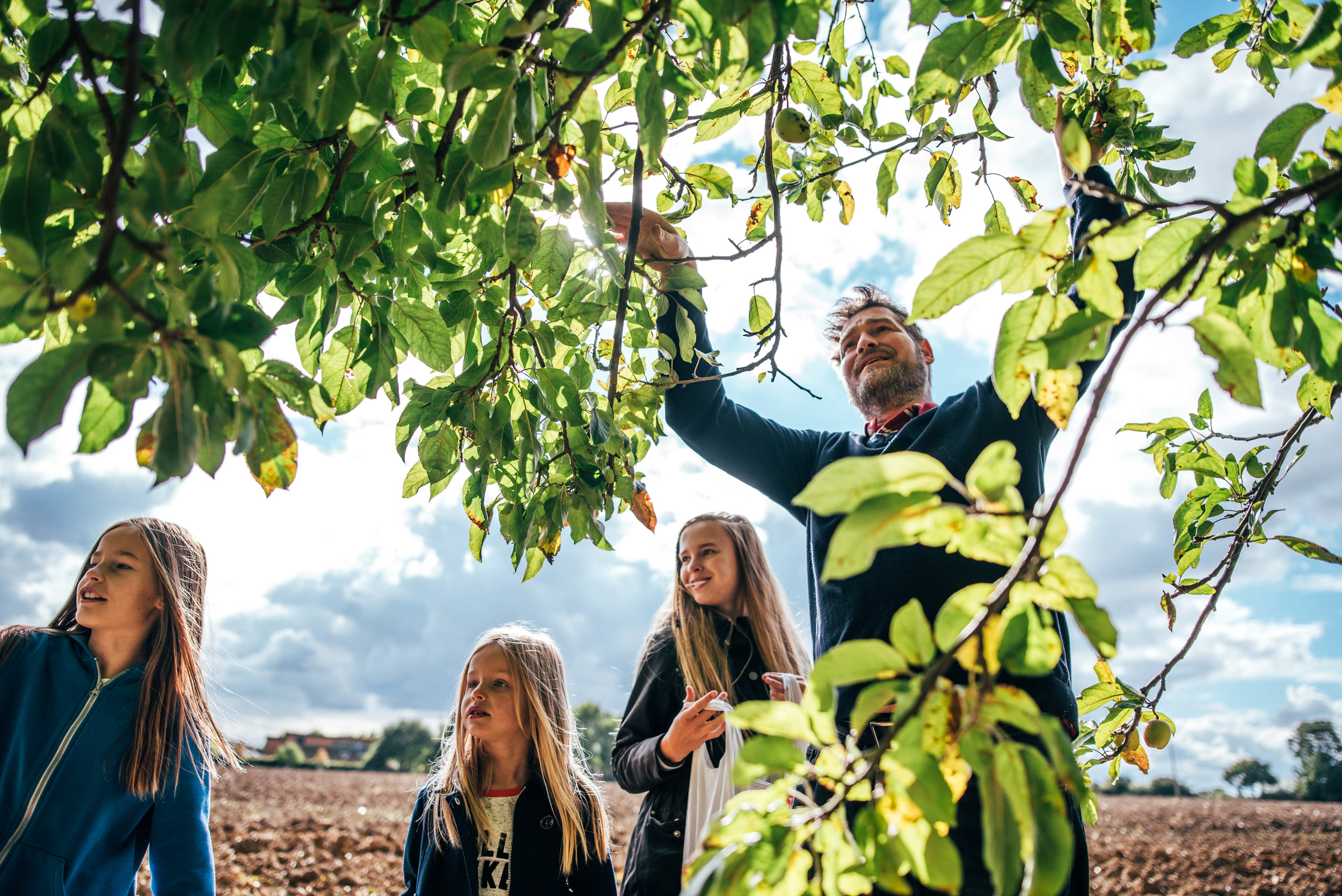 Family pick apples from tree Essex UK Documentary Portrait Photographer