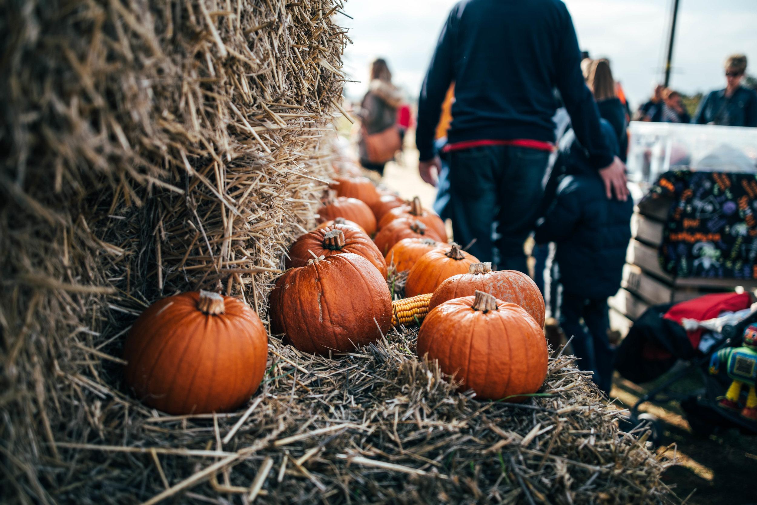 Pumpkins Farm Colchester Essex UK Documentary Portrait Photographer