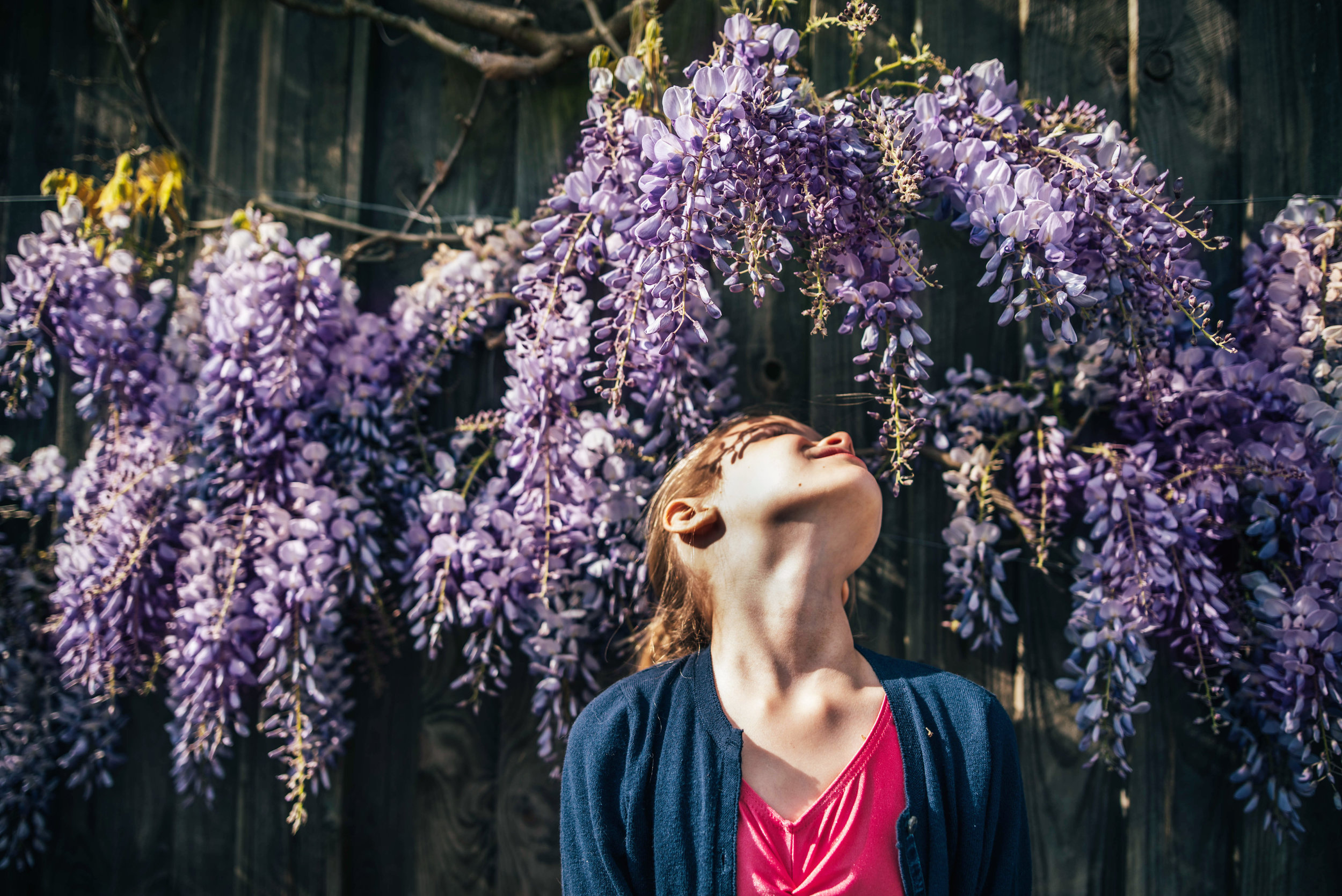 Little girl in Wisteria Essex UK Documentary Lifestyle Portrait Photographer