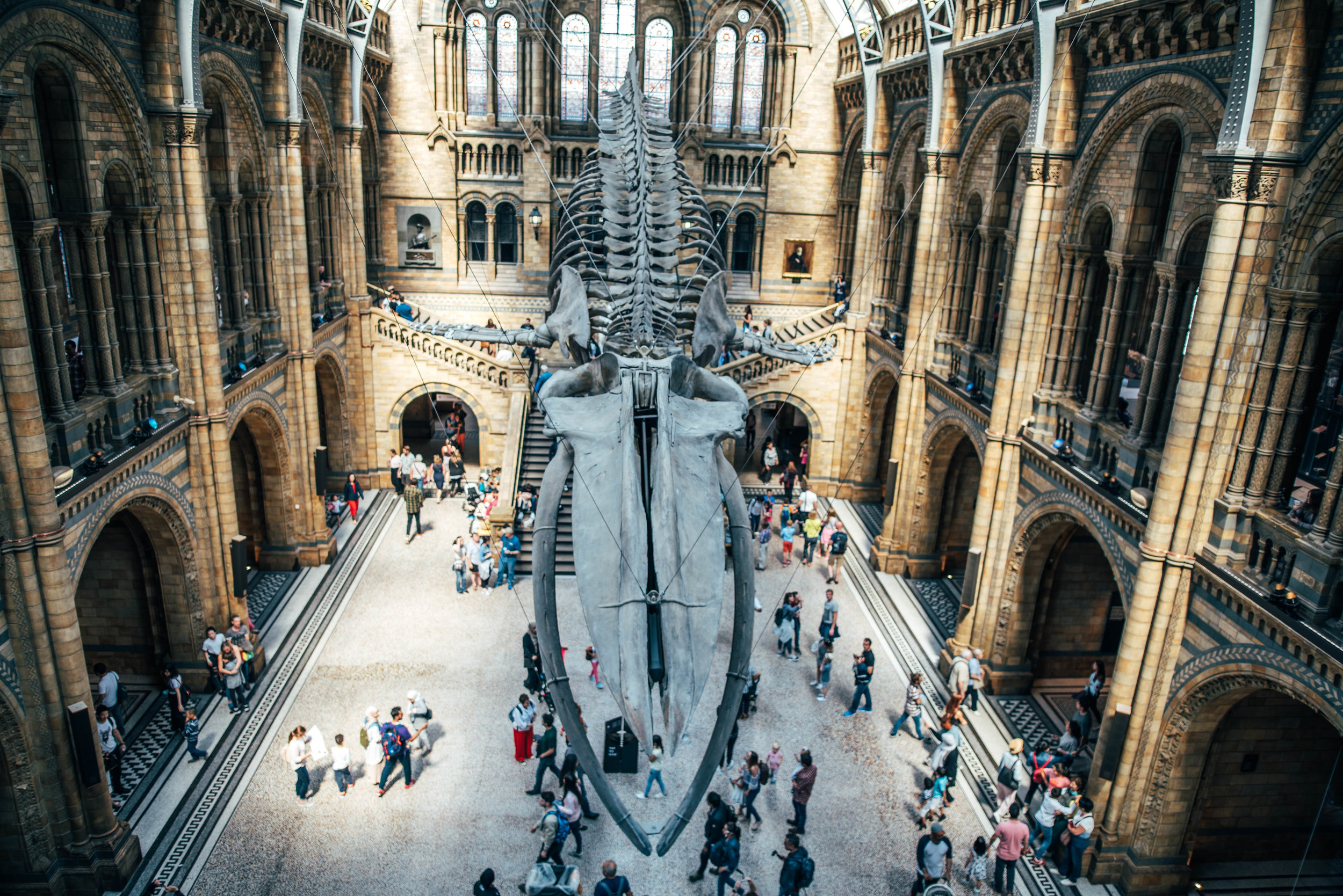 Blue Whale Exhibition at London Natural History Museum Essex UK Documentary Lifestyle Wedding Photographer