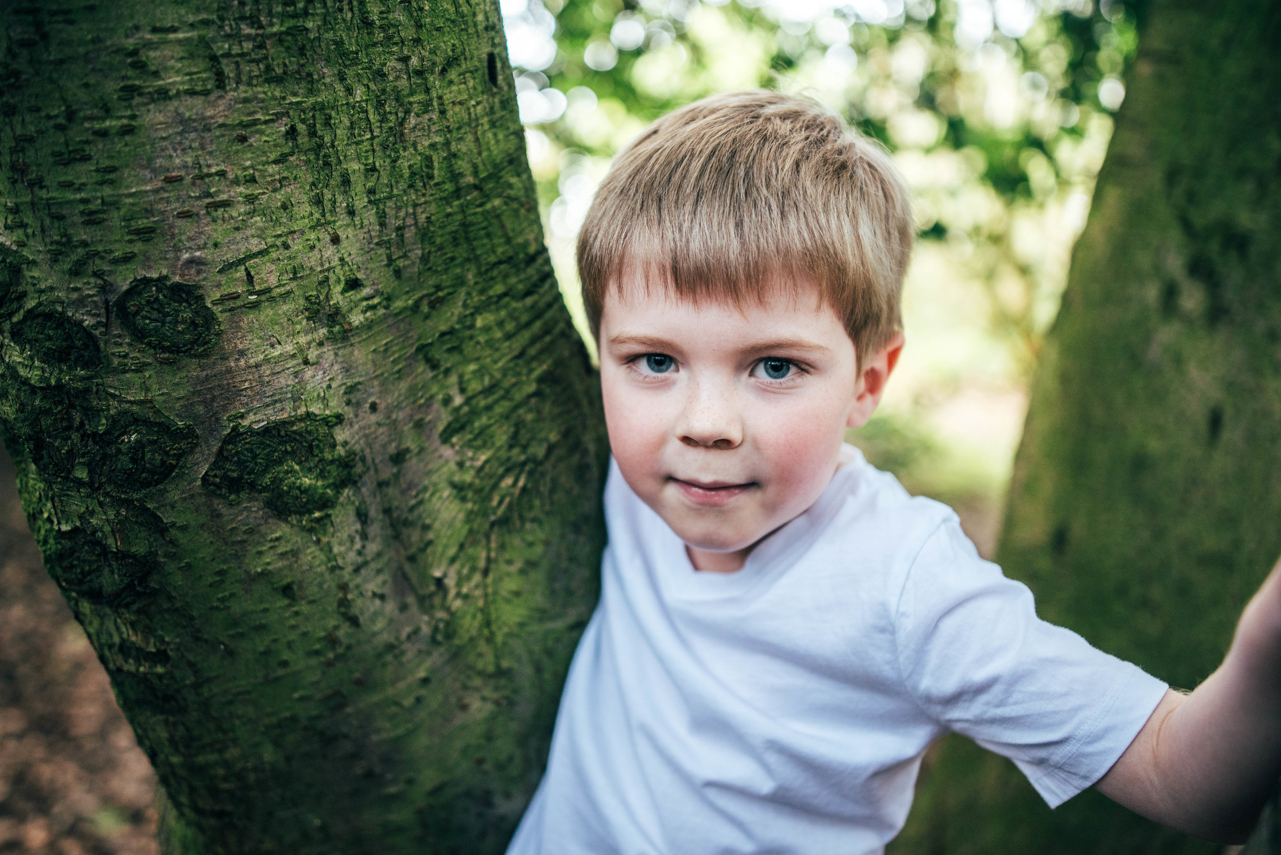 Little boy in tree in park in Spring Essex & London Documentary Family Photographer Lifestyle