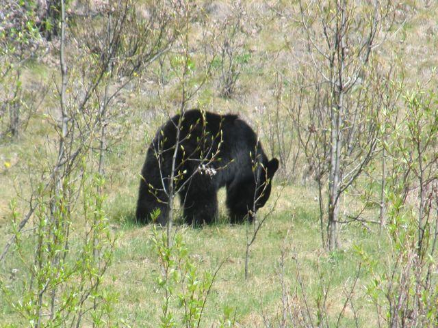 bear may30.jpg