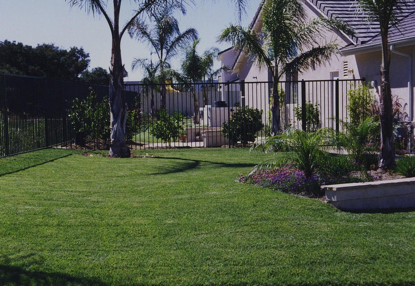 Sideyard With Palms.jpg