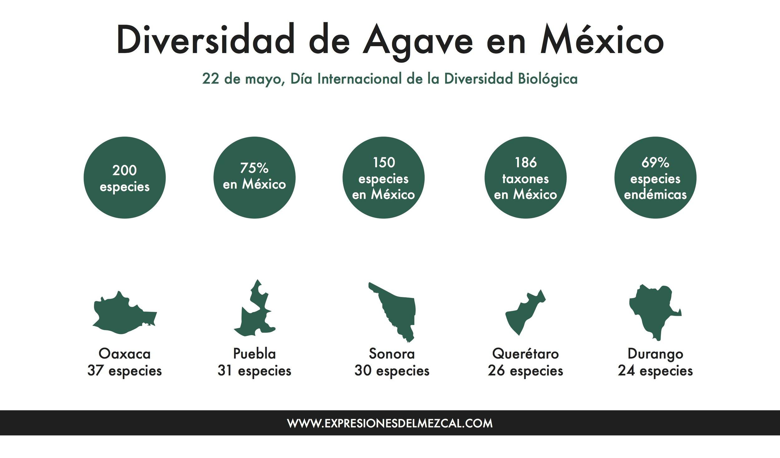 diversidad de agave infografía