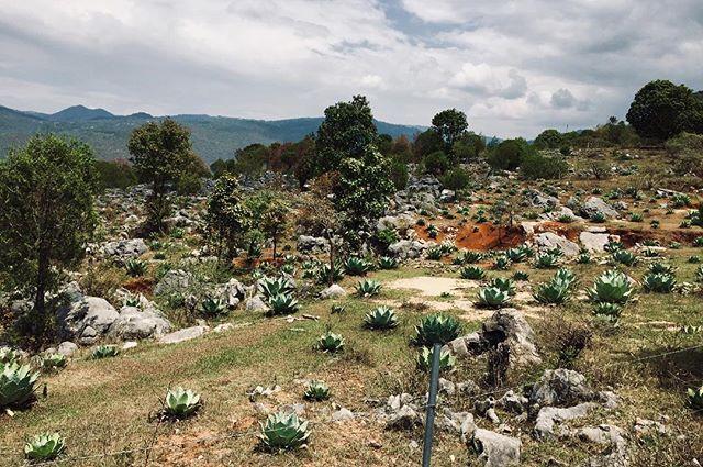 Confeccionado por la sierra y adornado por el verde maguey papalote está hecho este paisaje de la Mixteca alta. #maguey #agroecology #natura #nature #agave #papalote #mezcal #mixteca #mixtecaalta #campo