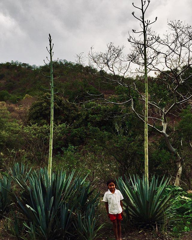 7 años de La Niña y el magueyito mexicano viviendo en los parajes de la Mixteca Alta. #maguey #mezcal #niña #mexicano #mixteca #cultura #antropologia #naturaleza #agave #sierra