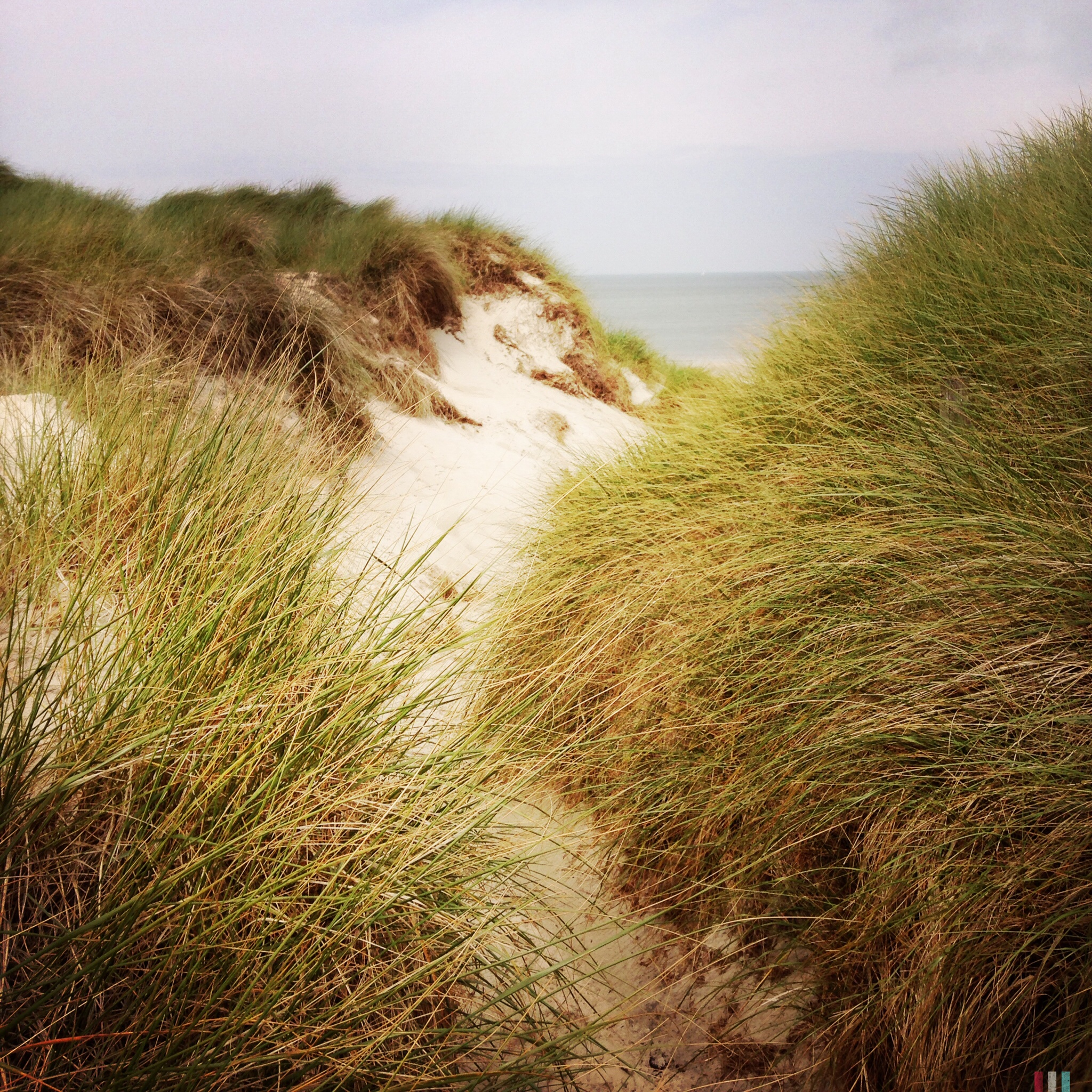 amrum, dünen