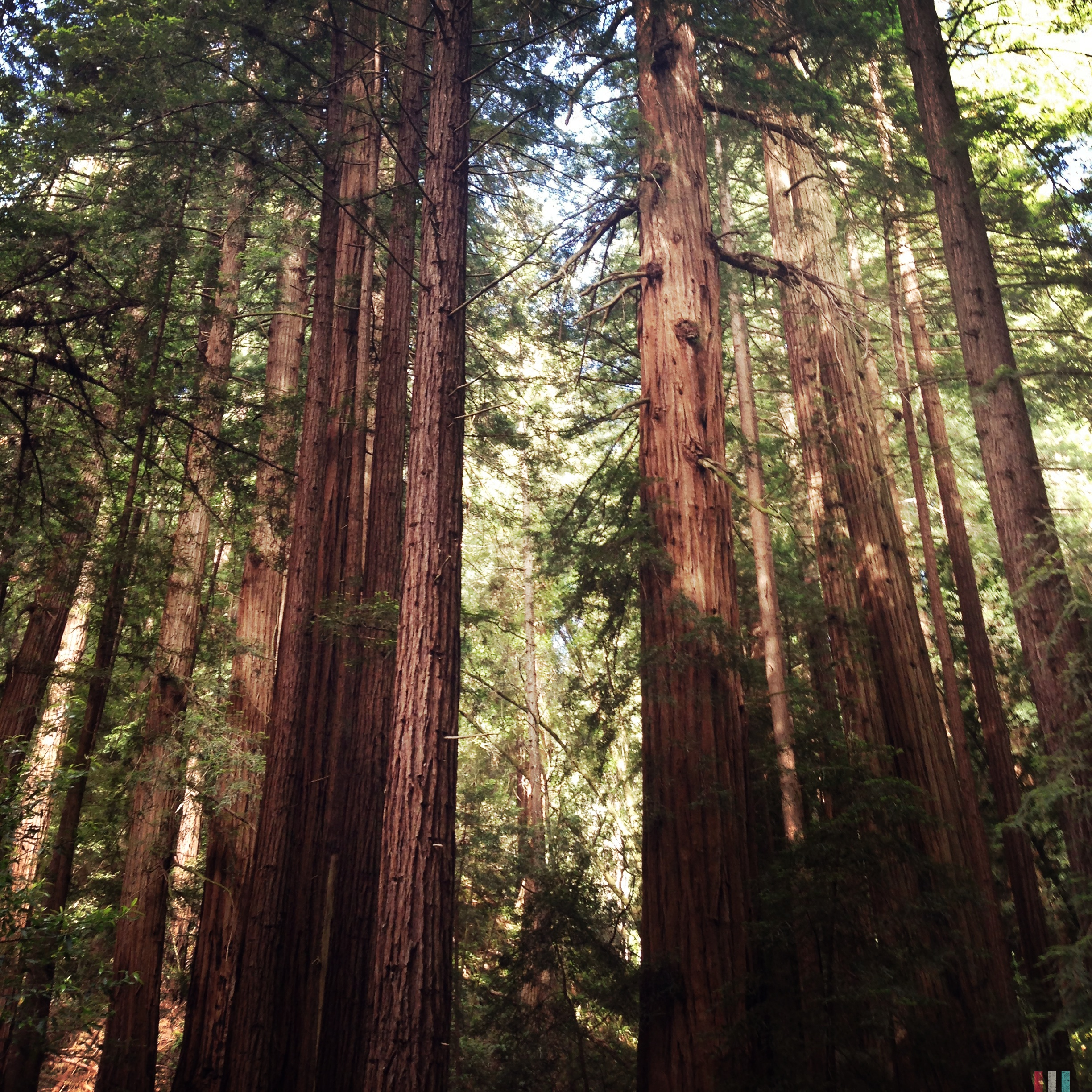 redwoods, california