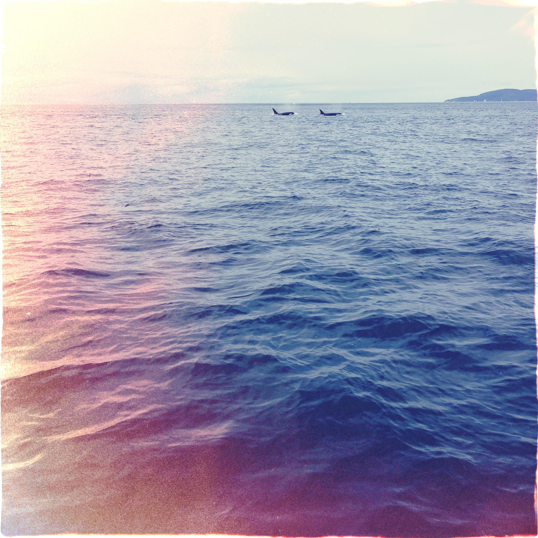 orcas, vancouver island