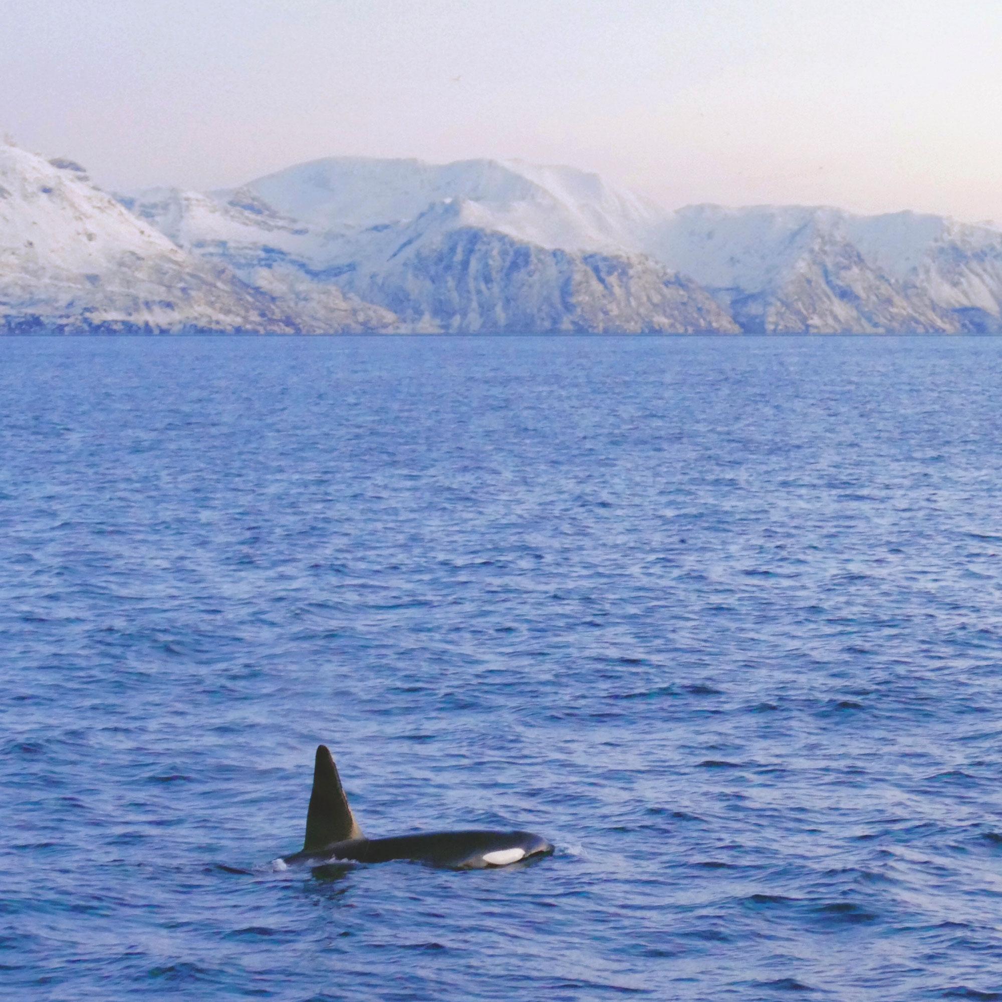 norwegen-wale-orcas-01.jpg