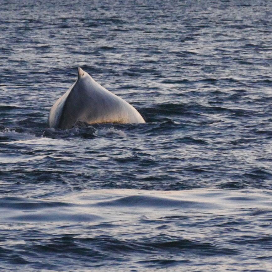 norwegen-wale-buckelwale-03.jpg