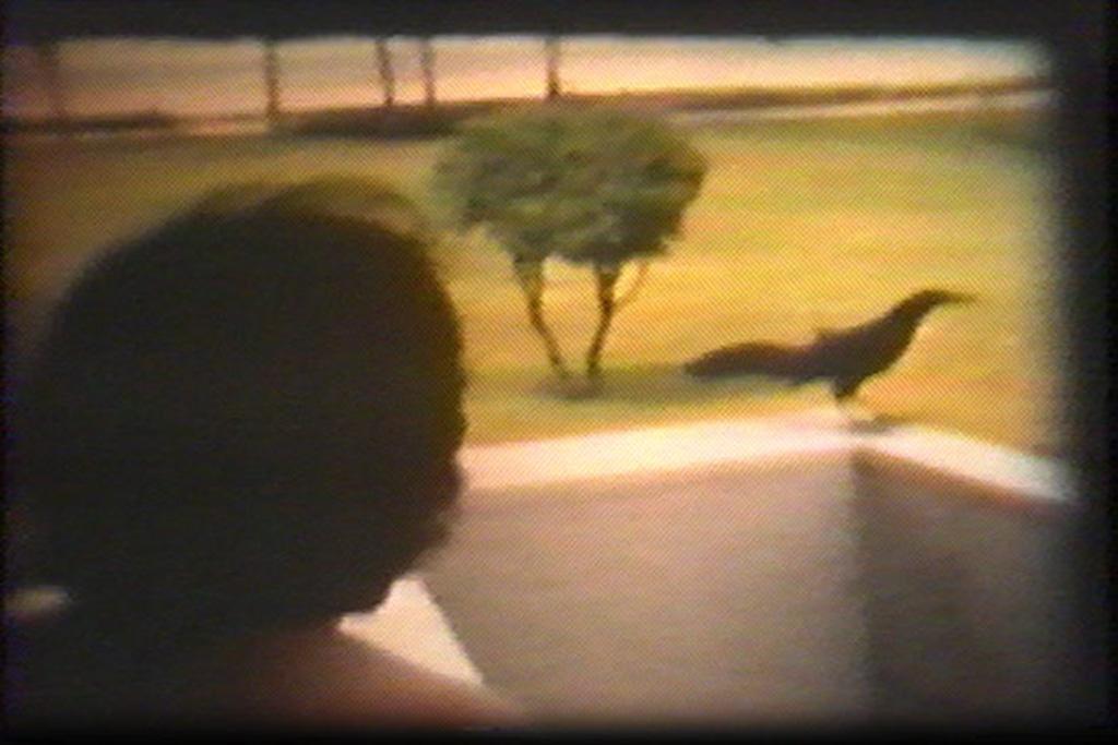 home (movies); bird