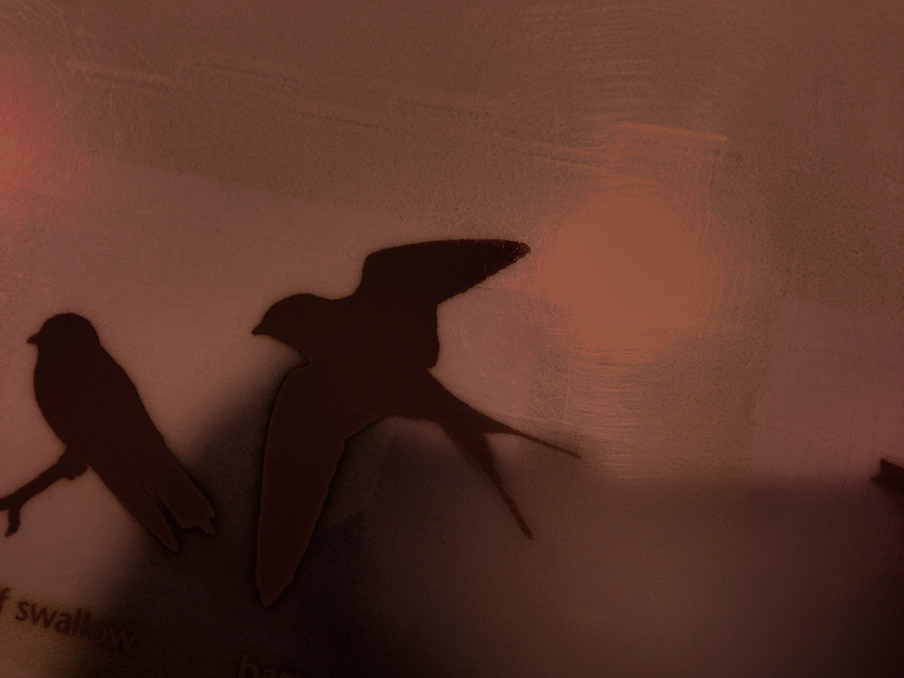 Prairie Swallow, Signage (flight)