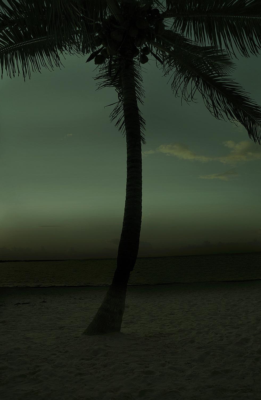 Single Palm