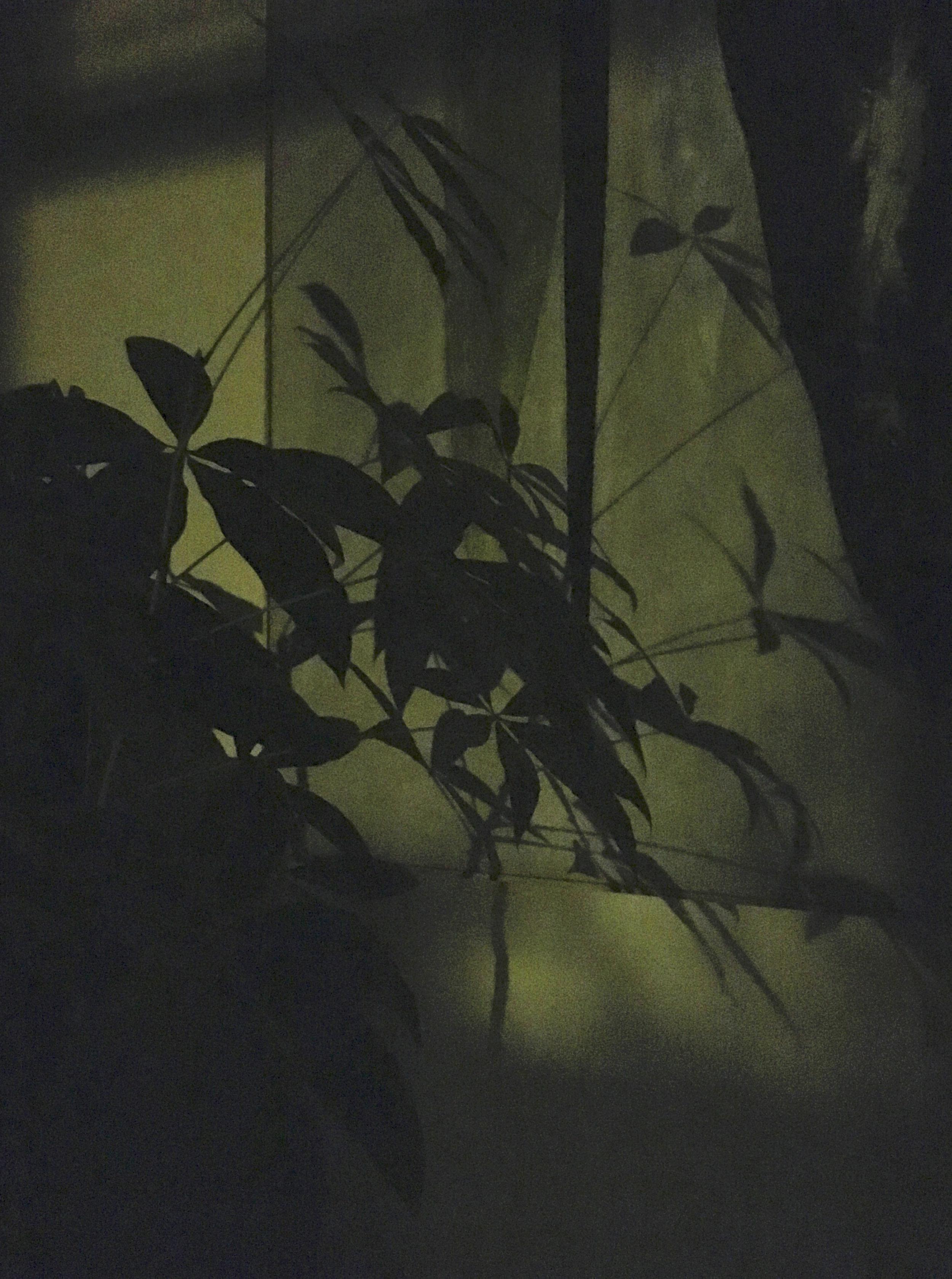 The Luxury of Night (2:00AM)
