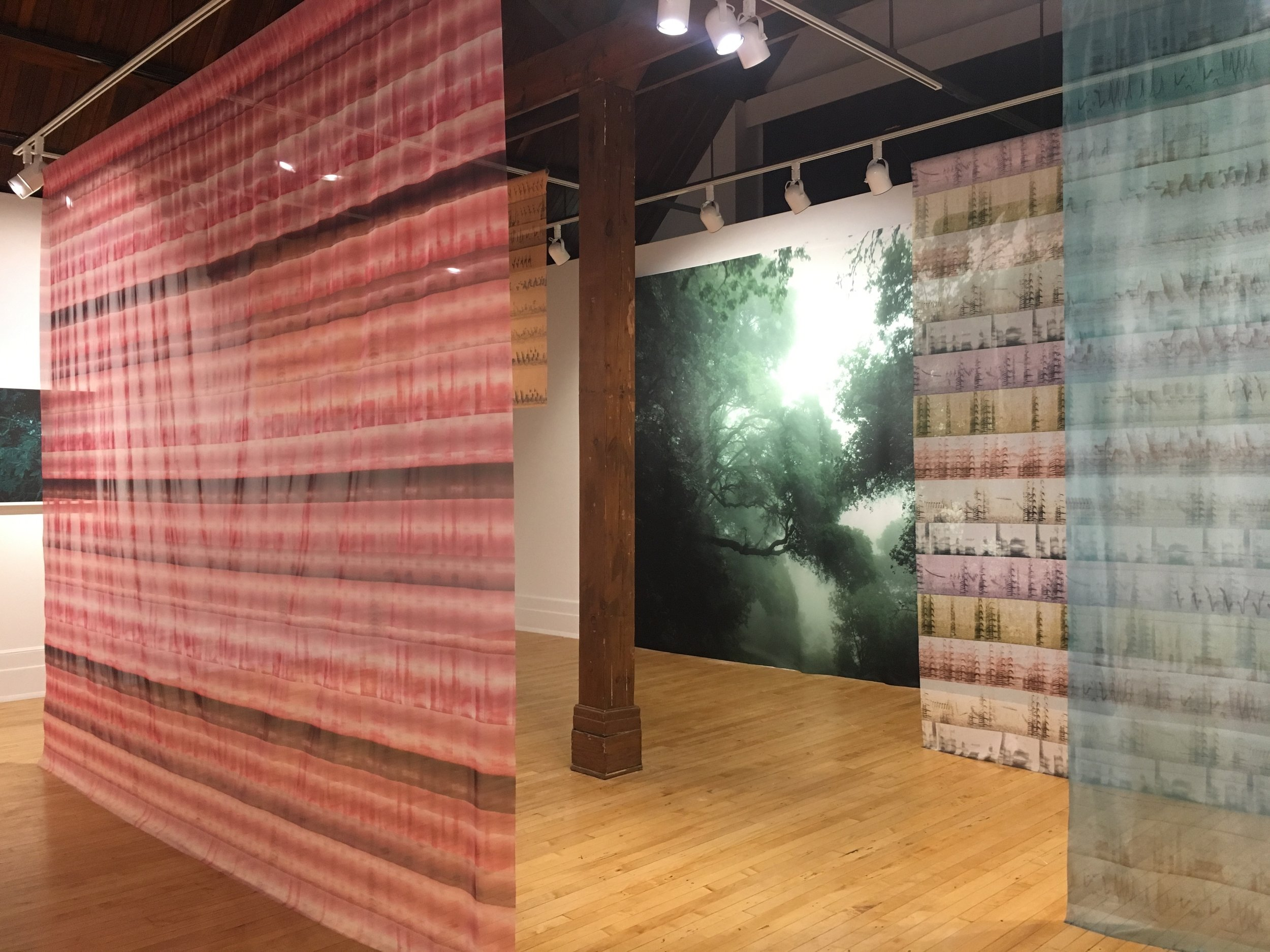 "Sonnenschein Gallery 2018 Lake Forest College, Lake Forest, IL   Last Calls, On Any Given Night …   Solvent prints on silk and shear fabric   Green Daze    (10' x 16')    Indigo Bunting female, calls    (40"" x 12' )    Nene, mating calls    (10' x 72"")    Indigo Bunting male, calls    (10' x 60"")    California Condor, calls    (10' x 12.5')   Audio Installation   On any Given Night: migration season along the Mississippi     Flyway (audio installation) Sound editing by Alex Drosen     Audio File / Loop 20 minutes    Recordings from 1950- 2016 by Arthur A. Allen, Gregory Budney, Martha Fischer, William W.H. Gunn, Justin Hite, Peter Keane, Geoffrey A. Keller, Bob McGuire, Steven R.Pantle, Thomas G. Sandler, and Gerrit Vyn  All Courtesy The Cornell Lab of Ornithology"