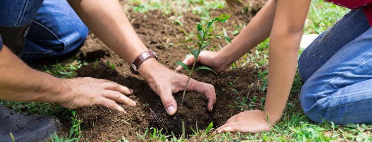 planting3.jpeg