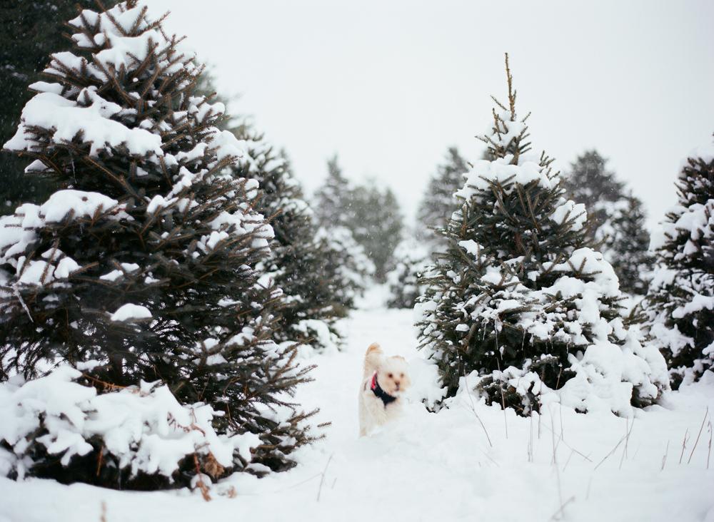 christmas-trees-wausau-wi-007.jpg