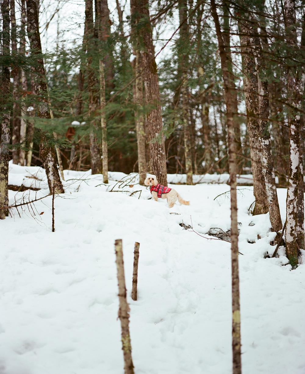 northern-wisconsin-snowshoe-002.jpg