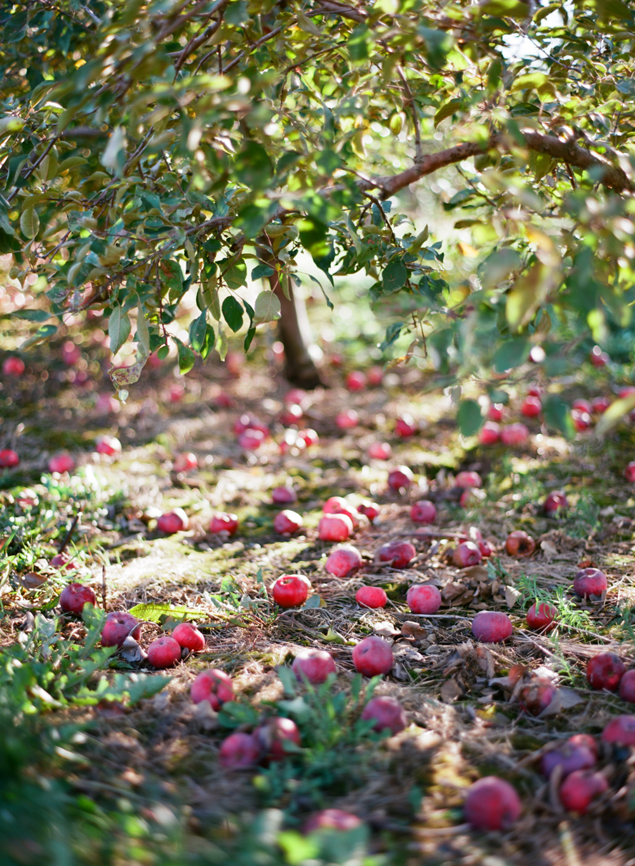Wausau_WI_Pumpkin_Apple_Orchard_002.jpg