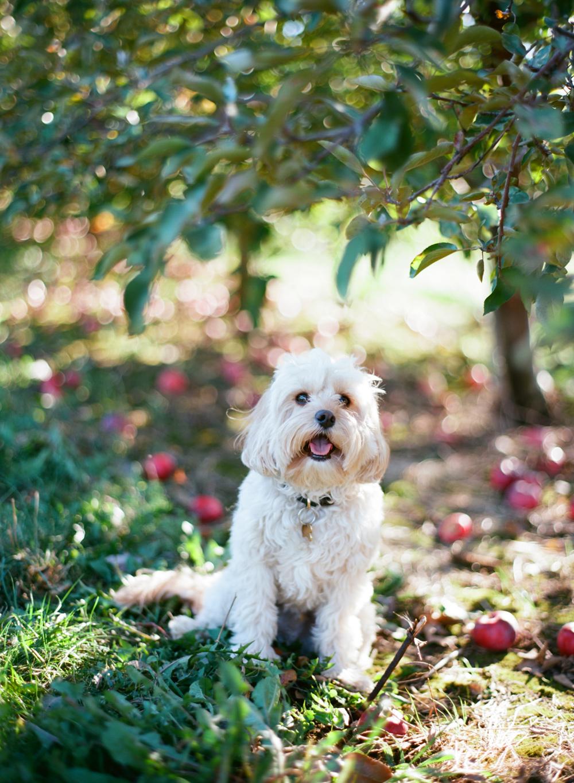 Wausau_WI_Pumpkin_Apple_Orchard_004.jpg